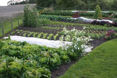 Want to read more about the no-dig gardening method described here #gardening