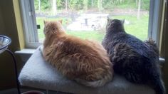 Chloe and Lucky Cats Relaxing by the window