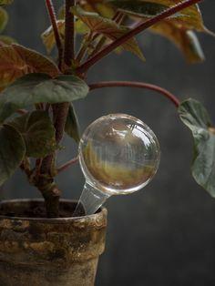 Isaiah 61, Houseplants, Indoor Plants, Urban Gardening, Flowers, Gardens, Joy, Instagram, Interior