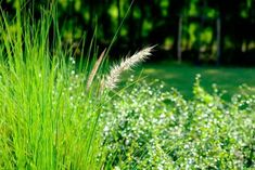 Trade In Your Lawn For A Low-Maintenance Meadow Garden - Here By Design Meadow Garden, Lawn And Garden, Land Use, Grass Seed, Water Quality, Garden Care, Save Water, Drought Tolerant, Habitats