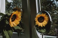 SARAH   Photographer (@fotografierende) • Instagram-Fotos und -Videos Instagram Accounts, Nature Photos, Pictures, Photography, Videos, Flowers, Photos, Photograph, Fotografie