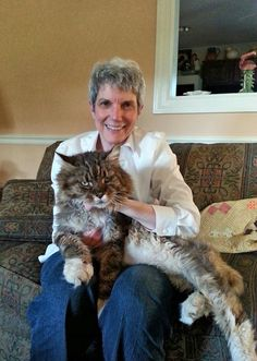 Kittie and Ringo, a Maine Coon. Oh my goodness! I Love Cats, Crazy Cats, Cool Cats, Pretty Cats, Beautiful Cats, Animals Beautiful, Kittens Cutest, Cats And Kittens, Giant Cat