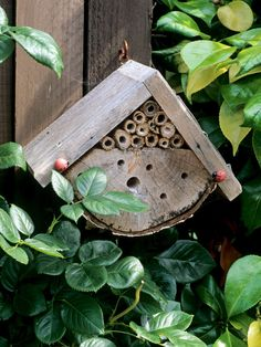 Insect House Attracts Beneficial Insects