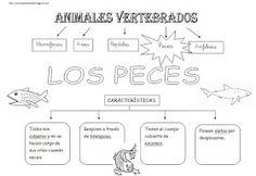 Peces Science Week, Science For Kids, Life Science, Science And Nature, Activities For Kids, Spanish Projects, Montessori Science, Spanish Worksheets, School Items