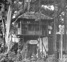 Don the Beachcombers banyan treehouse office at the International Marketplace [R.I.P]