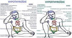 quelles-differences-entre-lhypo-de-lhyperthyroidie-et-quels-sont-les-traitements-les-plus-adaptes