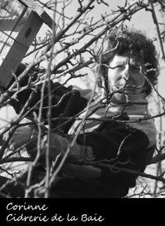 Corinne Rousseau au sommet de ses arbres (bio) de la Cidrerie de la Baie