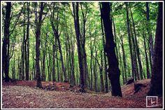 Boschi Monte Faito, Castellammare di Stabia, Napoli, wood, mountain https://www.facebook.com/pages/LQuadro/296470903800598?fref=ts