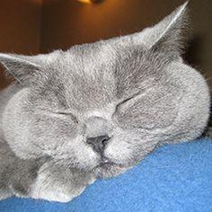 Gladys the cat