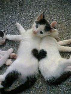 toi et moi = l'amour