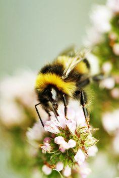 Bee facial features