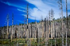 Tree Skeletons, Partly Cloudy Skies