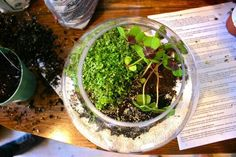 More terrarium love. #gardening #tutorial #decorating
