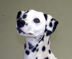 Dalmatian Dogs, 101 Dalmatians, Jazz, Labrador Retriever, Pitbulls, Animals, Labrador Retrievers, Animales, Pit Bulls