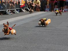 National Geographic: Oktoberfest among 'Best Fall Trips'. Photo: The Running of the Wieners on Fountain Square at Oktoberfest-Zinzinnati 2013. The Enquirer/Leigh Taylor