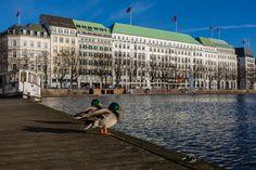 Hamburg Alster Enten | Bildschönes Hamburg