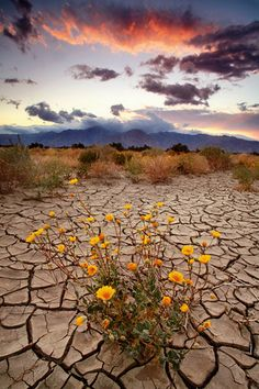 ANZA-BORREGO STATE PARK. There are more than 5,000 miles of road in this park.