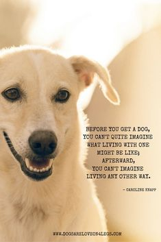 Dog Quote - Before you get a dog you cant quite imagine what living with one might be like; afterward you cant imagine living any other way.