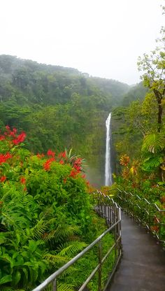 best waterfall hikes in Hawaii. best things to do in Big Island, near hilo or day trip from kona. state park on big island waterfall hiking trail. Outdoor travel tips. Vacation Ideas, Hawaii Vacation, Hawaii Travel, Beach Trip, Beach Travel, Luxury Travel, Travel Usa, Vacation Places, Dream Vacations