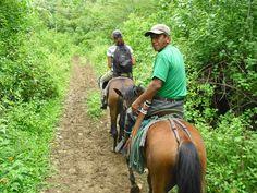 Activities and trips from the Hacienda El Dorado, Ecuador Whale Watching, Ecuador, Wilderness, Surfing, National Parks, Horses, Activities, Explore, Animals
