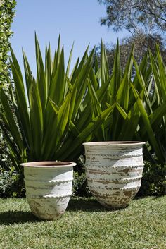 The Dagar Planter makes a perfect vessel for large indoor or office plants, and can be planted up with overflowing citrus or olive trees if you have a sunny spot. Large Indoor Planters, Tree Planters, Garden Planters, Indoor Plants, Planter Pots, Indoor Olive Tree, Vegetable Garden Tips, Office Plants, Container Plants