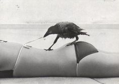 [bothersome_birds_04.jpg]