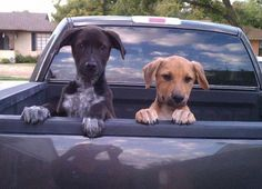 """We're goin fer a ride!!!! Oh boy oh boy oh boy!!!"""