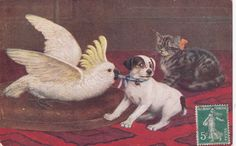 Cat watches parrot pull on dog's blue collar, 1907 ; TUCK