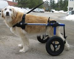 The Benefits of Dog Wheelchairs for Handicapped Pets