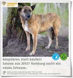 Saloma kommt aus einem riesigen Hundelager in Rumänien und ist jetzt im Tierheim Hamburg.  http://www.tierheimhelden.de/hund/tierheim-hamburg/mischling/saloma/11196-0/  Saloma ist sehr unsicher und zurückhaltend und braucht viel Geduld, bevor sie twas auftaut. Wenn man sie aber mehrere Tage mit Futter bestochen hat, dann traut sie sich langsam näher heran. Ein sicherer Zweithund im neuen Zuhause wäre ideal. Eine ruhige Lage auch.