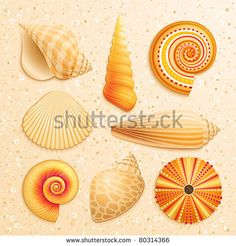Seashell collection on sand background. Vector illustration. - stock vector