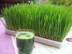 ONE Powerful Shot Of Wheatgrass Juice A Day To Kill Candida Infection, Alkalize Your Body, STOP Bad Breath Health Benefits of Wheatgrass - Juicing For HealthHealth Benefits of Wheatgrass - Juicing For Health Alkaline Fruits, Wheat Grass Shots, Alkalize Your Body, Wheatgrass Powder, Wheatgrass Juicer, Juicing Benefits, Health Benefits, Salud Natural, Juicing For Health