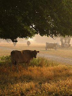 Country Living ~ Morning shade