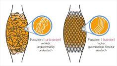 Zuallererst: Faszien sind die Bindegewebshüllen, die alle muskulären Strukturen umgeben. Von Kopf bis Fuß. Das bedeutet , dass sie jede unserer Bewegung begleiten und im Idealzustand diese unterstützen. Der Unterschied zwischen untrainierten und trainierten Faszien lässt sich am besten anhand eines Schaubilds verdeutlichen.  http://www.claptzu.de/behandlungswelten/behandlungswelt-fitness/faszientraining.html