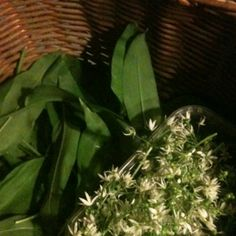Wild garlic leaves and flowers Wild Garlic, Free Food, Leaves, Canning, Flowers, Plants, Plant, Home Canning, Royal Icing Flowers