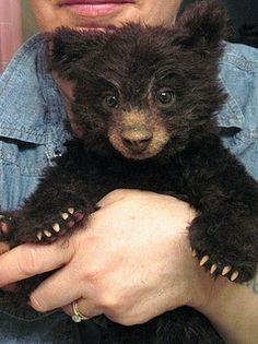 Joanne Livingston- Rachel's bear | Flickr - Photo Sharing! ...Looks SO real! :)...it's a teddy bear.  Omggg. I want one!!!