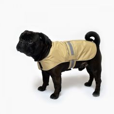 www.chezvalde.com No Wets Beige Beige, Dogs, Clothing, Outfits, Pet Dogs, Doggies, Outfit Posts, Kleding, Ash Beige