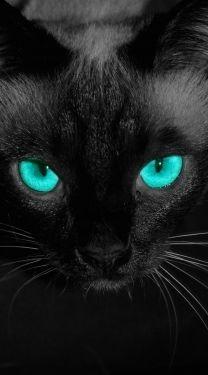 #black
