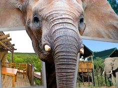 Addo Rest Camp - Accommodation in Addo. Addo Game Reserve And Bush Lodge Accommodation, Western Region, Eastern Cape, South Africa St Croix Island, River Mouth, Elephant Park, Herd Of Elephants, African Penguin, Close Encounters, Camping Games, Great White Shark