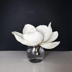 Magnolia Bloom @corinanika