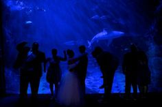 Virginia aquarium wedding bridal party