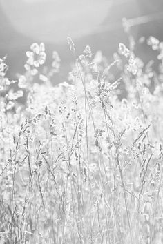 Aesthetic Colors, White Aesthetic, Aesthetic Art, Shades Of White, Grey And White, White Light, Art Blanc, Blanco White, Images Instagram