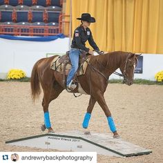 The gorgeous Indian Rain Dance and his incredible trainer Kelsey Parisi #Repost @andrewrybackphotography .  Cute shot from the Equine Comeback Challenge last night at @pa_nationalhs Trainers were given 90 days to work with some off the track thoroughbreds and see how they could reinvent their careers. This cute ottb took top honors on the night! #andrewrybackphotography #horseshowphotography #horsesofinstagram #horseshowlife #PaNHS #pennsylvanianationalhorseshow