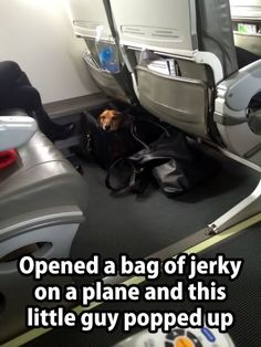 Haha too stinking cute. I wish I had a neighboring Dachshund on all the flights I take