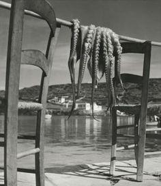Octopus, Ionian island of Corfu, Greece, 1938 © Herbert List: Magnum Photos Herbert List, History Of Photography, Modern Photography, Black And White Photography, Street Photography, Greece Photography, Photography Magazine, Vintage Photography, Lee Friedlander