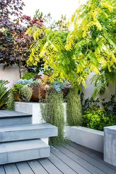 Sitting Pretty In The Garden Bed Is Pittosporum Tobira, 'Miss Muffet'. Photograph: Peta North Story: Australian House and Garden Small Space Gardening, Small Gardens, Outdoor Gardens, Vertical Gardens, Garden Design Plans, Small Garden Design, Garden Cottage, Garden Beds, Landscape Plans