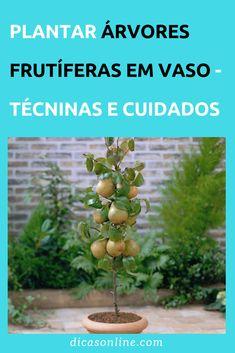Frutas em Vaso - Como Plantar em Miniatura