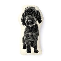 Mini Poodle Black now featured on Fab. HEY! OLIVER'S TWIN! :)