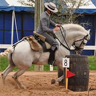 Working Equitation International Association of the USA | GALLERY
