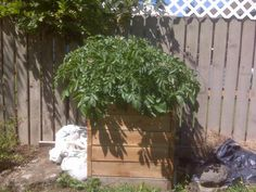 Sinfonian's Potato Bin Page: Build-As-You-Grow Potato Bins!   You may have read about my obsession with finding the perfect potato bins to ...